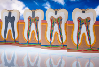 Tooth Anatomy: Discover the Parts of your Teeth